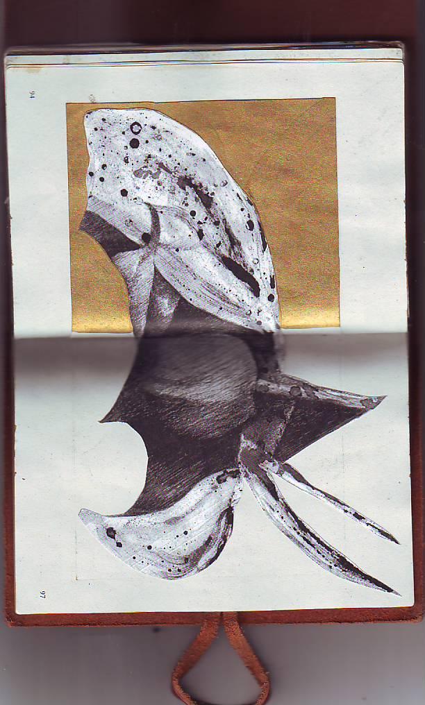 QUAGLIA0016