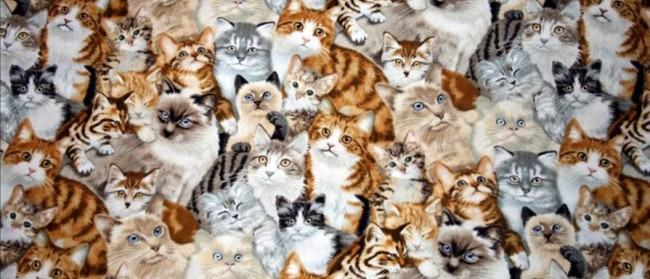 lots-of-cats_zpse9b8be3d-e1386904020427